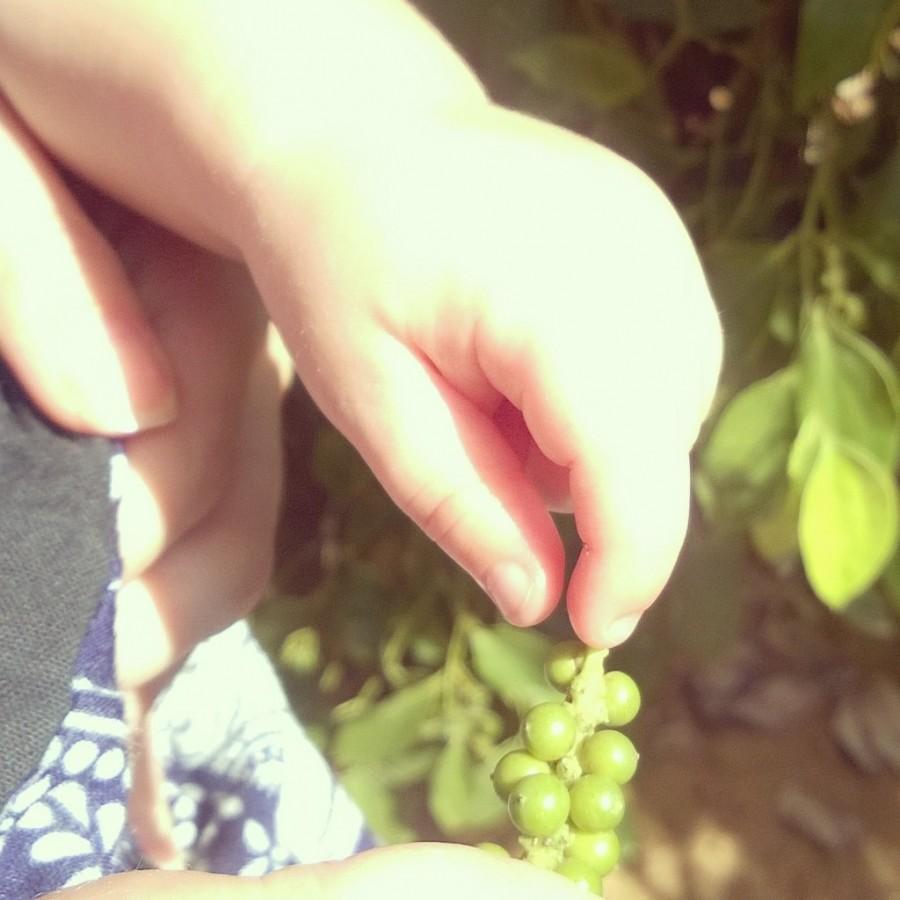 Omogen grönpeppar och söta bebisfingrar