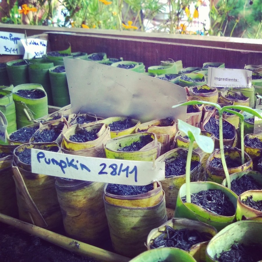 Ekologiska krukor av bananblad på Phu Quoc Bee Farm